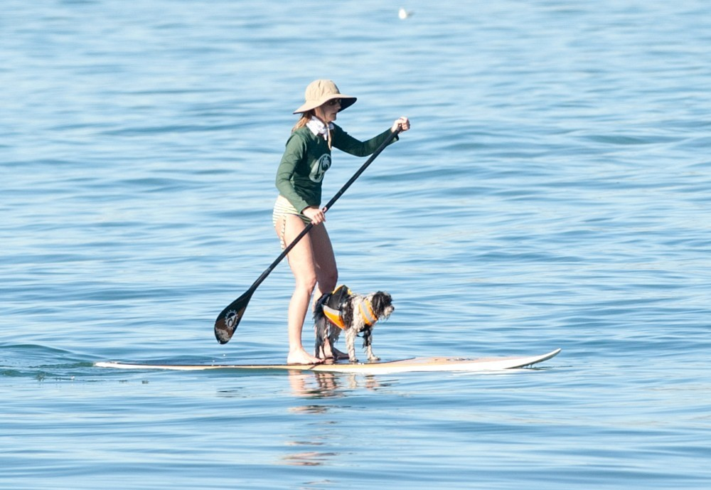 Helen hunt goes paddle boarding with her pup pictures for Dog daycare santa monica