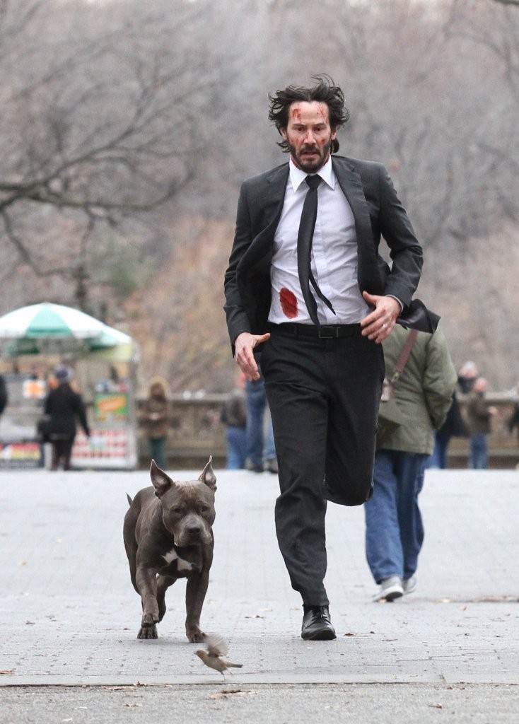 What Breed Of Cat Is Keanu