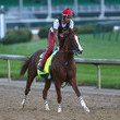California Chrome Photos - 1 of 366