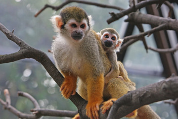 Adorable Apes and Monkeys