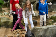Princess Eleonore, Princess Elisabeth and Prince Emmanuel of Belgium visit Sealife on July 12, 2014 in Blankenberge, Belgium.