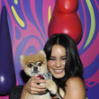Bentley the Pom 2019 Getty Entertainment - Social Ready Content