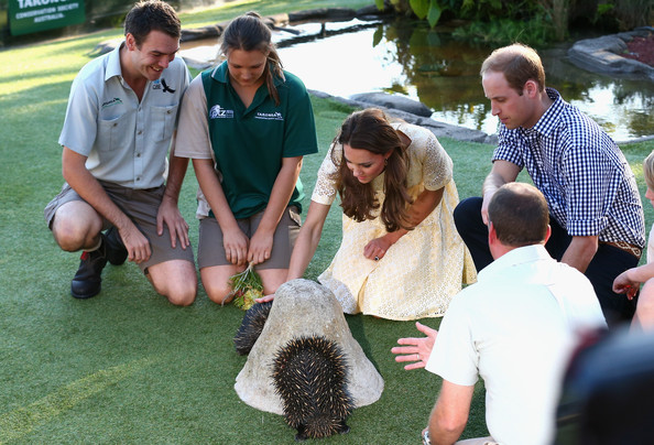 Prince William, Duke of Cambridge, and Catherine, Duchess of Cambridge, meet an Echidna at Taronga Zoo on April 20, 2014 in Sydney, Australia. The Duke and Duchess of Cambridge are on a three-week tour of Australia and New Zealand, the first official trip overseas with their son, Prince George of Cambridge.