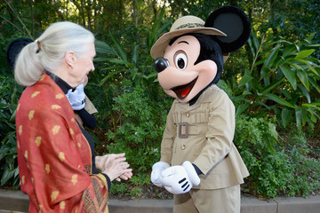 Jane Goodall Walt Disney World Awaken Summer - Media Preview