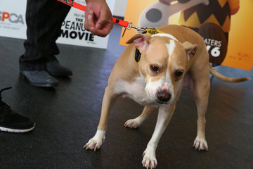Peaches Snoopy Visits NYC ASPCA Adoption Center