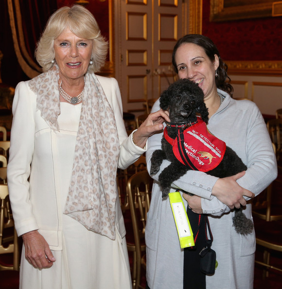 Camilla, Duchess of Cornwall meets Medical Detection Dog Nano and her owner Yasmine Tomblad (who has a peanut allergy) at a Medical Detection Dog Reception at James's Palace on March 11, 2014 in London, England.