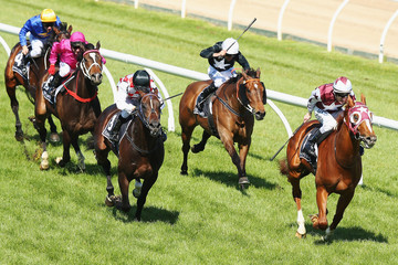 Stratum Star Caulfield Cup Day
