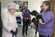 "The Queen is introduced to 12 week old Labrador puppy ""Flint"" by her trainer Ruth Narracott as she tours the facilities at ""Canine Partners"" charity in Midhurst in Sussex. Canine Partners is a registered charity that assists people with physical disabilities to enable them to enjoy greater independence and a better quality of life. Where possible the charity helps people with disabilities into education and employment through the provision of specially trained assistance dogs. As part of this partnership, the well-being of the dogs is also a key consideration. Canine Partner dogs are trained to perform tasks such as opening and closing doors for their wheelchair-using partners, retrieving dropped items, loading and unloading washing machines, helping their partners to undress and getting help in case of emergency. As well as providing practical assistance, the dogs provide companionship, emotional support and increased opportunities for the human partner to interact with members of the public. The Charity currently has nearly 400 dogs partnered with disabled people across the UK, all of whom receive regular aftercare support visits at home. Canine Partners works closely with other charities where it is beneficial to do so, including Guide Dogs, Hearing Dogs, Help for Heroes and The Royal British Legion."