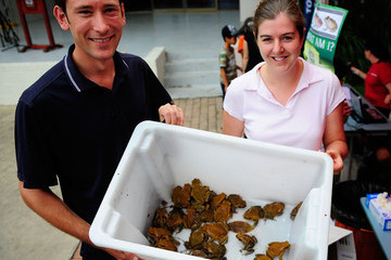 Richard Saunders Townsville Hosts Cane Toad Collection Day Cull