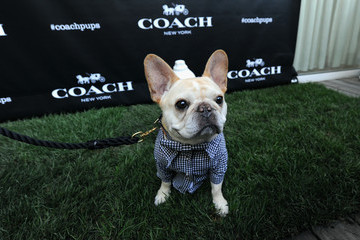 Walter Cronkite Coach and Toulouse Grande Celebrate the Coach Pups Campaign By Hosting An Event In New York, July 28th