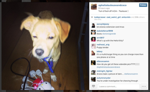 You Can Now Follow Ariana Grandes Dogs On Instagram Celebrity
