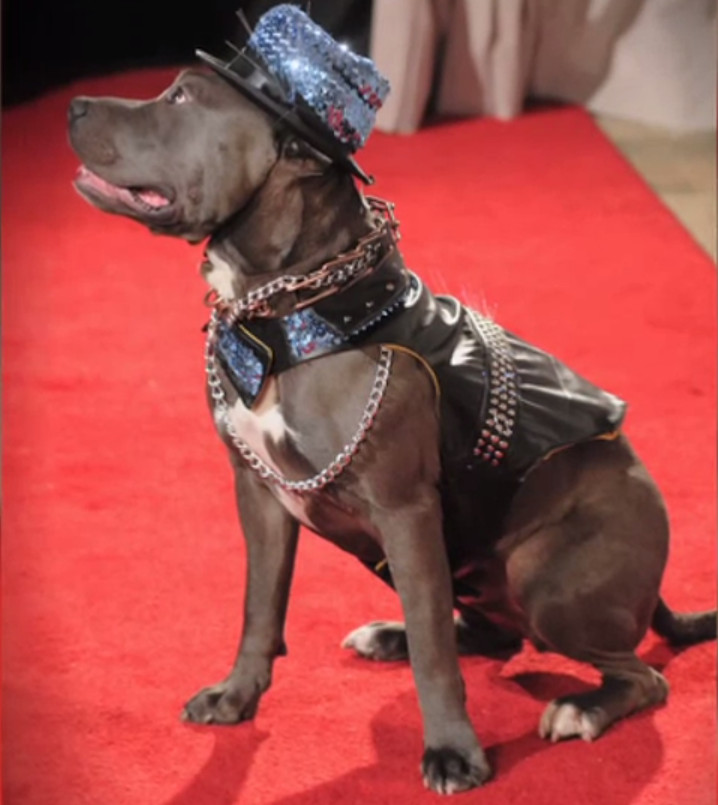 BEHOLD: The Dog-E! Oscars Red Carpet Special - aka Puppies in Gowns! [VIDEO]