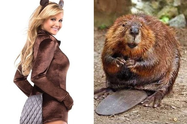 Sexy  Big Brown Beaver  sc 1 st  Zimbio & Sexy