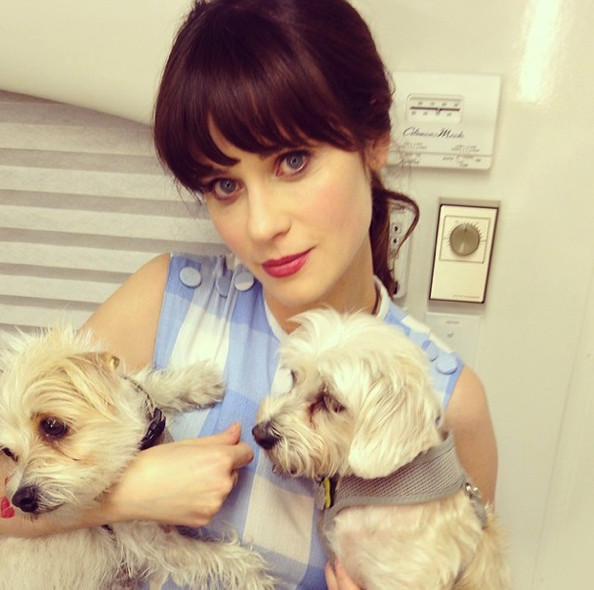 Zooey Deschanel is in puppy love.