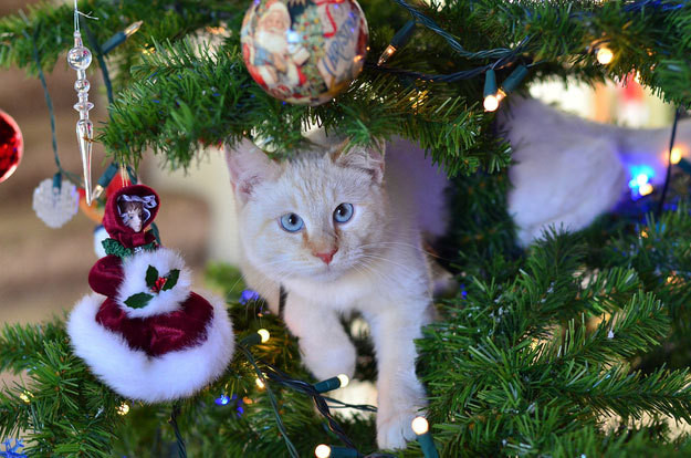 What Happens When Cats Eat Christmas Trees