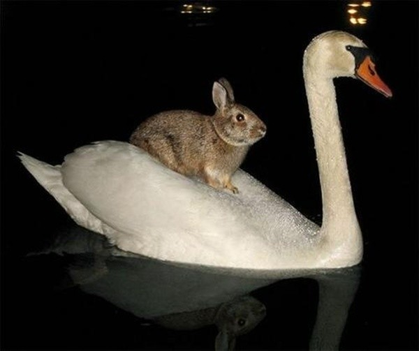 When Animals Ride Other Animals, We All Win