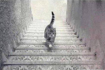 Burning Question: Is This Cat Walking Up or Down the Stairs?