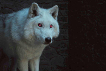 Here's What Happened To Ghost On 'Game Of Thrones'