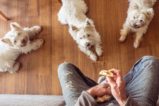 Everything Your Dog Should (And Shouldn't) Eat