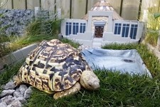 This Guy Spared No Expense on This Tiny Jurassic Park for His Turtle