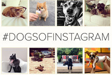 Meet the Most Design-Savvy Dogs on Instagram