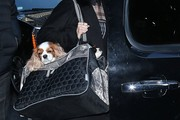 Julianne Hough Dog Carrier Duffle